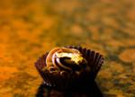 一口サイズのボンボンチョコレート『キャラメルショコラ』
